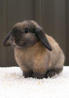 Imágenes de Conejos / Rabbits & Bunnies - Vol.1 - Imagenes con Frases, Fotos y Carteles para Compartir