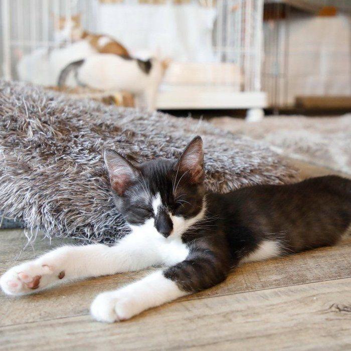 まだ早い が愛猫の命取りに いまから始める猫に合わせた熱中症対策 ねこのきもちweb Magazine 猫 猫と暮らす ねこ