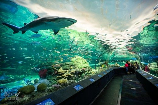 Ripleys Aquarium Toronto Coupons