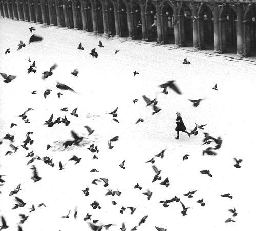 Gianni Berengo Gardin - Piazza San Marco, Venezia, 1960