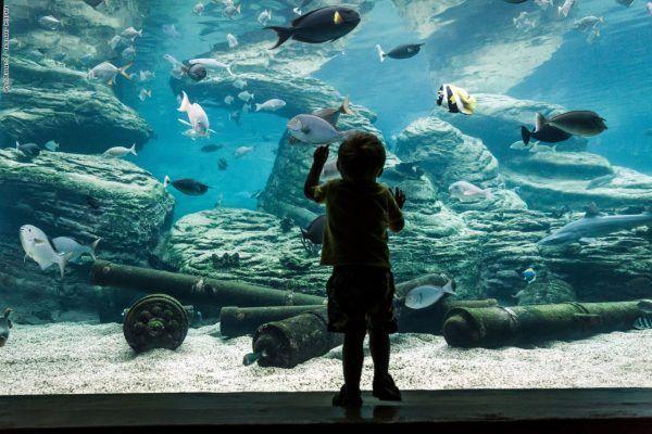 تعرف علي أكبر اكواريوم للأسماك النادرة في العالم في قلب مطار جدة الملك عبدالعزيز الجديد Places To Visit Tourism Natural Landmarks