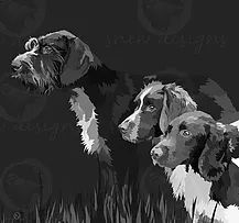 waiting for the master | GWP | English Springer Spaniel | German Wirehaired Pointer | snewdesigns | Digital