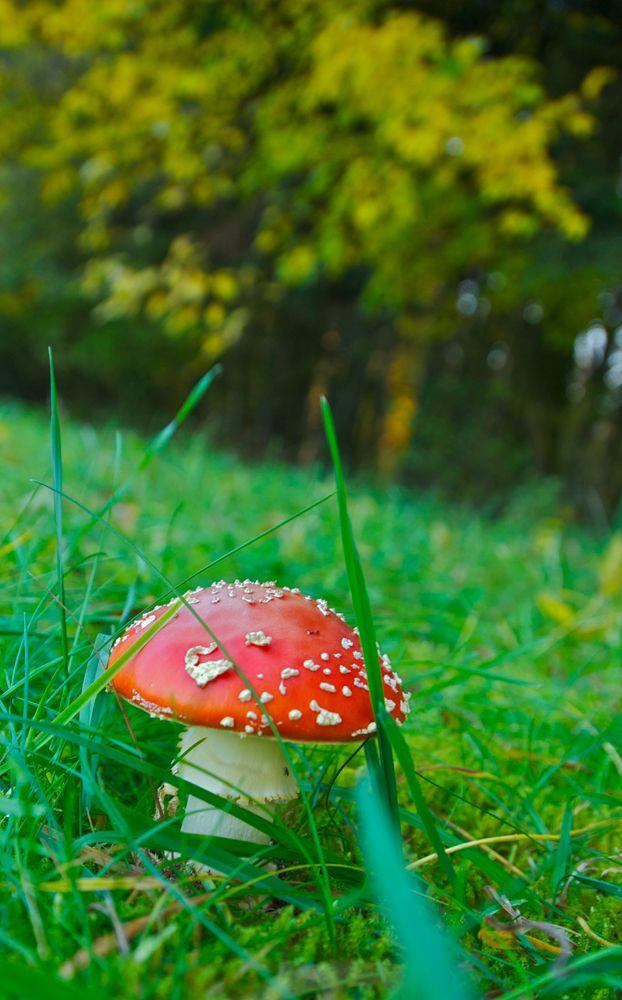 Zöld mezők, erdő szélek éke :)  Szarvasi Arboretum  http://www.pepikert.hu