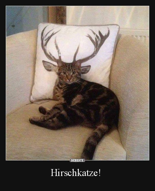 Du Bist Da Zu Hause Wo Deine Katze Wohnt: 2134 Best Lustige Bilder Images On Pinterest