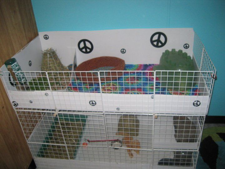 34 best images about my bunny on pinterest house rabbit for Build your own guinea pig cage