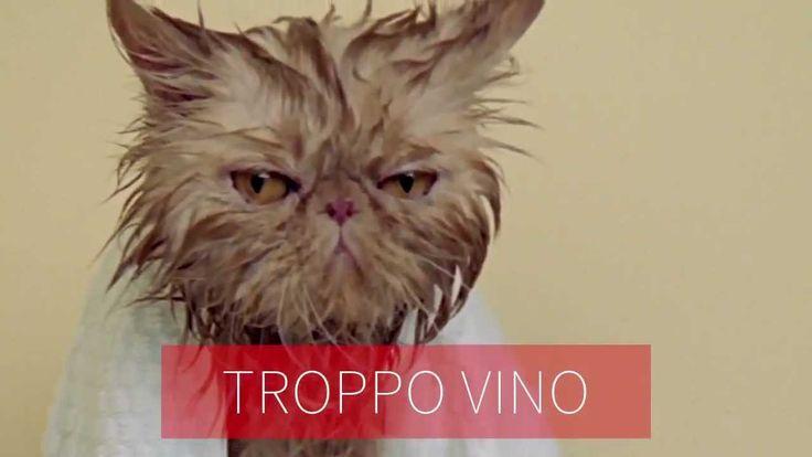 Vileda Supermocio Microfibre presenta: I gatti leccano di tutto