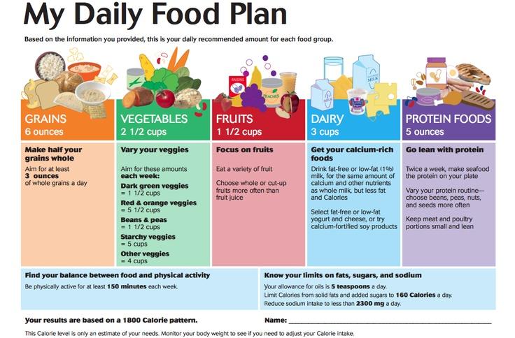My Daily Food Plan Worksheet - andrewgarfieldsource