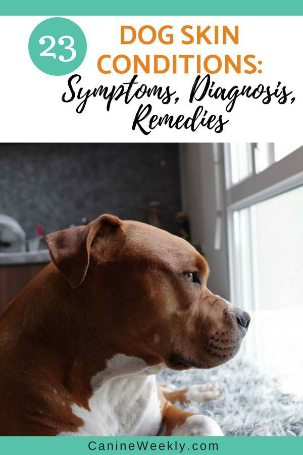 23 Dog Skin Conditions Symptoms Diagnosis And Remedies Dog