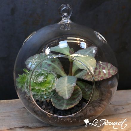 Love these glass succulent bubble bowls!  Le Bouquet St Laurent - your neighborhood florist since 1978!