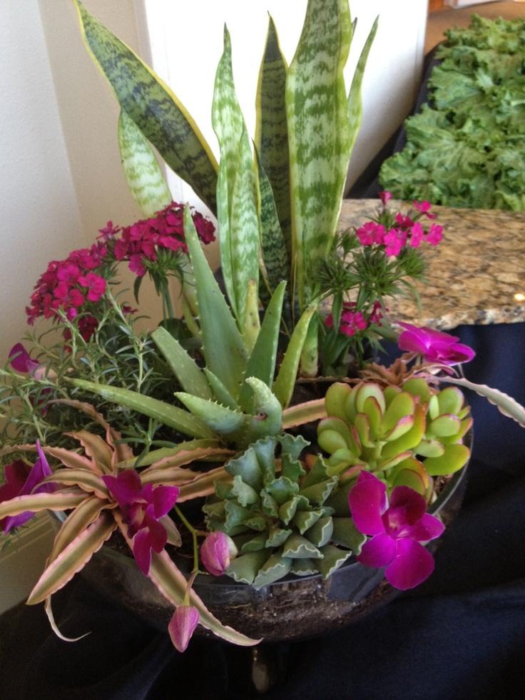 Succulent Dish Garden Ideas drought tolerant succulent container garden plans Succulent Dish Garden