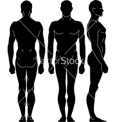 Human proportions vector 5159 - by mysontuna on VectorStock®