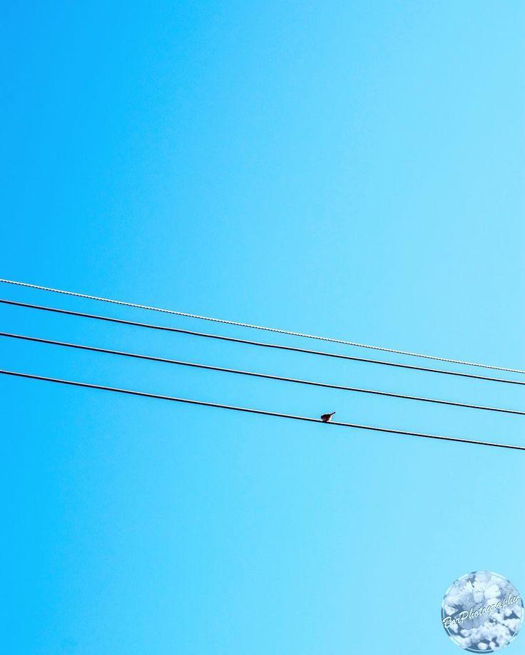#Sun #Sky #Bird #Blue #Wire #Light #Cable #White #Simple #Nature #Minimal #BlueSky #SunLight #Minimalism #Photograph #Photography #Photographer #PhotoOfTheDay #BorPhotography #MinimalPhotography