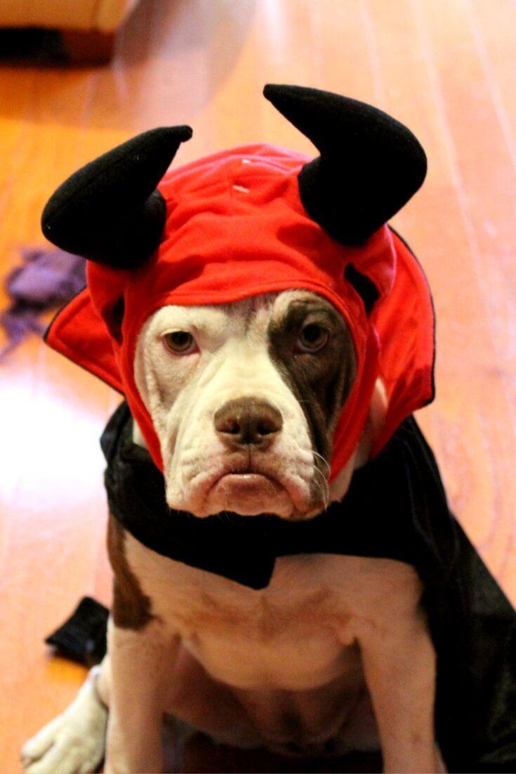 devil dog costume pic