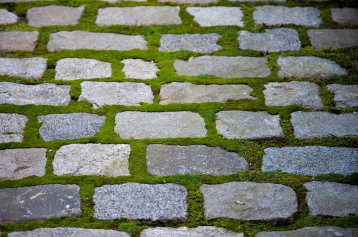 Granite Belgian Block with moss in between for garden path