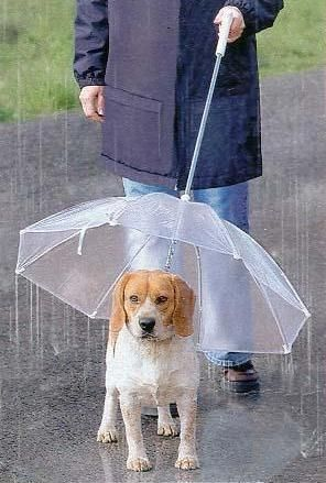 Umbrella leash for your pup! So even our doggies can enjoy a walk in the rain, without getting soaked.