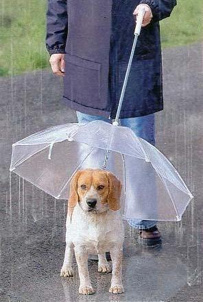 Laisse parapluie (environ 20€)