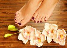 Female feet at spa salon on pedicure procedure Stock Image