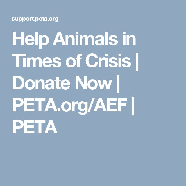 Help Animals in Times of Crisis | Donate Now | PETA.org/AEF | PETA