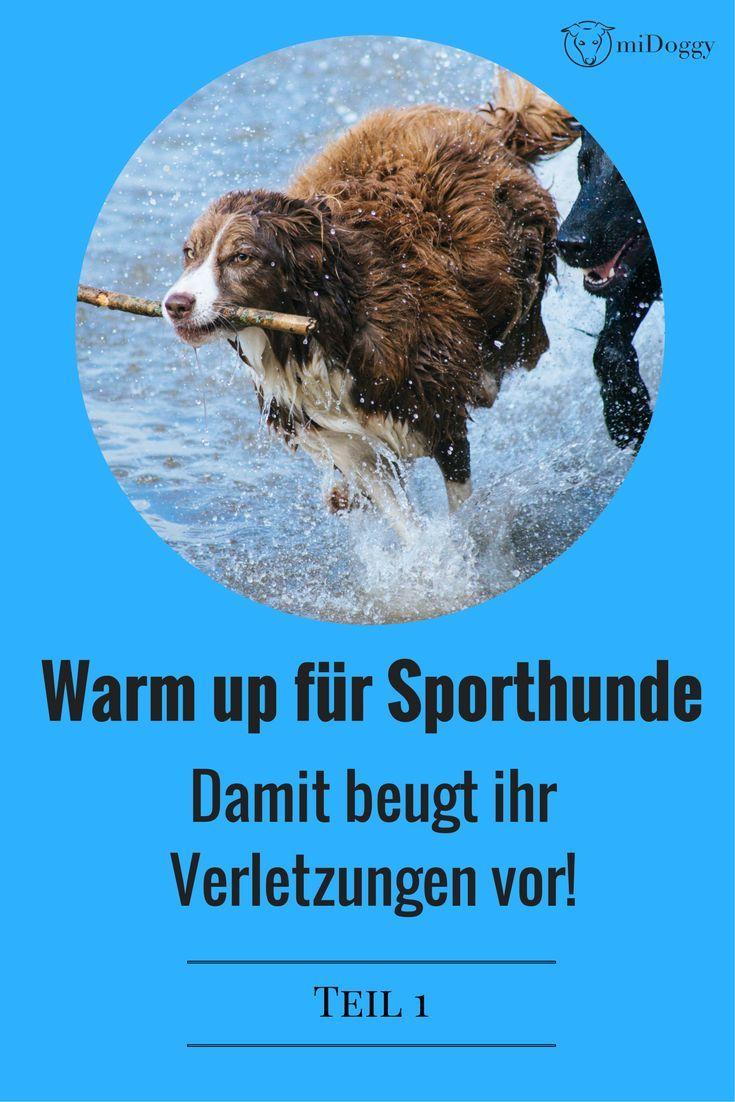 Ein Warm up für Sporthunde ist essentiell wichtig und beugt Verletzungen vor. Hier kommt ihr zu Teil 1 der Serie.