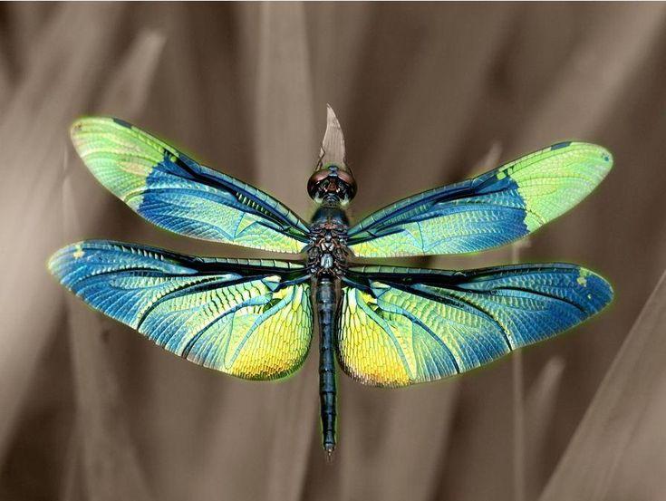 Dragonfly - photo by Kaz Watanabe