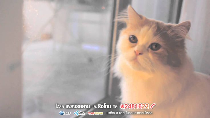 Sqweez Animal สควีซ แอนนิมอล - คำบางคำ Enchante