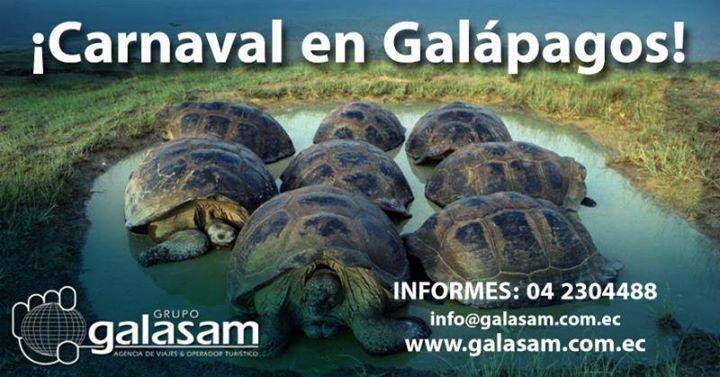 #Carnaval en #Galápagos! #Febrero 10 al 13  DÍA 1 BALTRA - SANTA CRUZ - ESTACIÓN CHARLES DARWIN Salida hacia las Islas Encantadas arribo al aeropuerto de Baltra recepción por parte de nuestros guías acreditados por el Parque Nacional traslado a Santa Cruz y acomodación en el hotel. Por la tarde visita a la Estación Científica Charles Darwin y al Centro de Interpretación del Parque Nacional Galápagos para admirar los exhibidores de tortugas e iguanas terrestres. Retorno al hotel. DÍA 2…