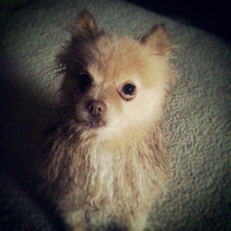 150 best dog grooming images on pinterest dog grooming dog pepi solutioingenieria Choice Image