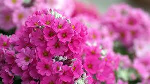 güzel çiçekler indir - Google'da Ara