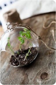 Hanging herb garden? Yes please.