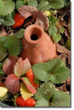 Ollas: Unglazed Clay Pots for Garden Irrigation Permaculture Courses, Information, Forums, News