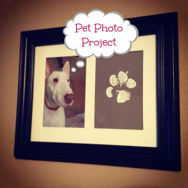 Pet Photo Project-good idea for some family members I know