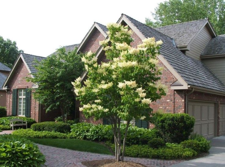Japanese Lilac Tree - A hearty option that survives harsh conditions, this tree produces massive lilac-scented flowers, which grow in clusters.