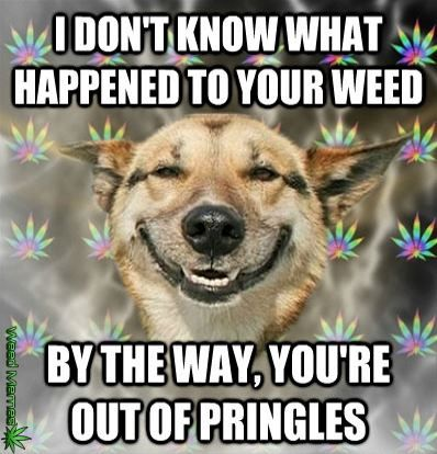 dog ate the weed funny weed memes jokes  quotes smoke