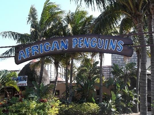 African Penguin Enclosure, UShaka Marine World