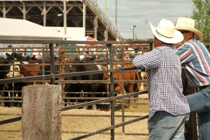 """#ExploreMB: The 50th Annual Manitoba Stampede. """"So far I experienced a lot of firsts in my first few days in Manitoba: my first CFL game, my first fossil dig, and then on a sunny afternoon, my first rodeo. If there's one place to immerse yourself in Manitoba cowboy culture for the first time, the 50th Annual Manitoba Stampede is definitely where to do it!"""""""