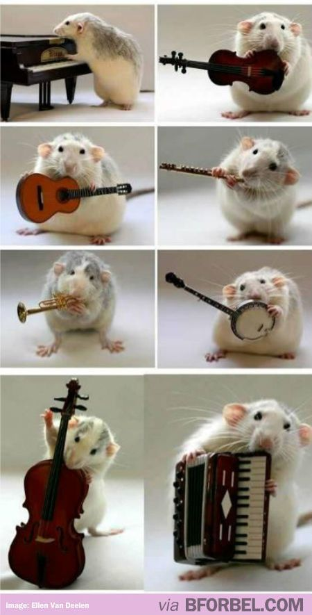 A rat playing musical instruments. That's enough internet for today.