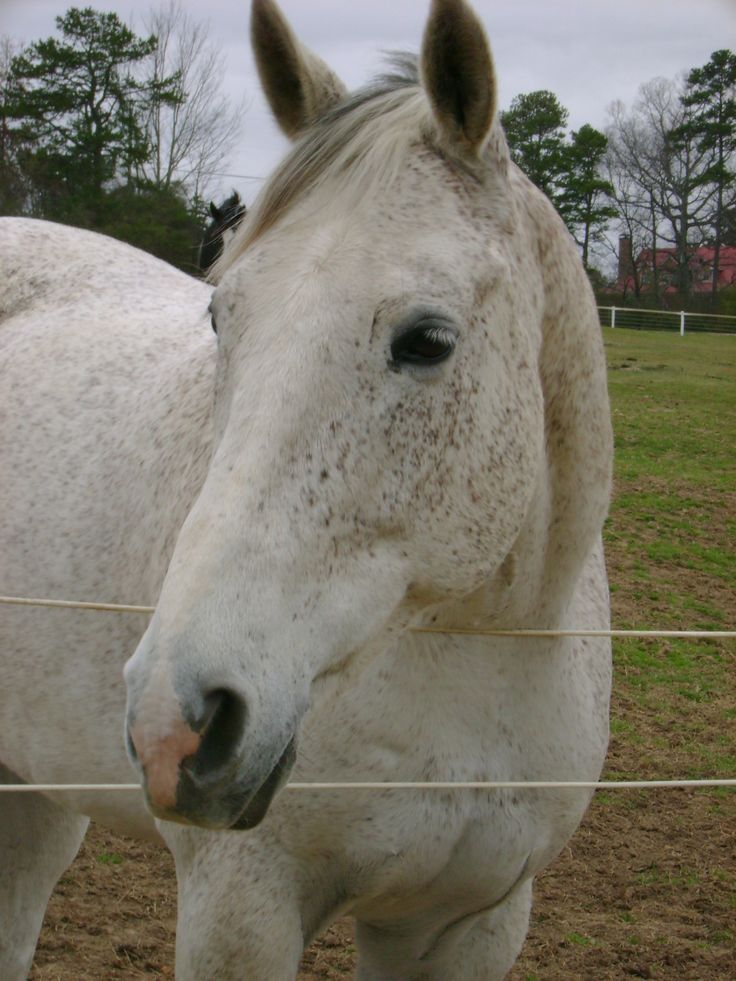 My beautiful boy Damus | Horses | Pinterest