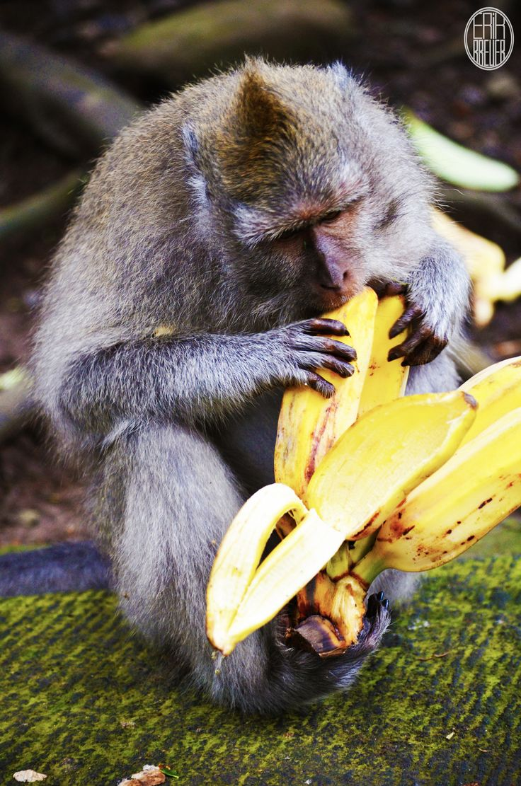 """""""Never interrupt me when I'm eating a banana."""" - Animals"""