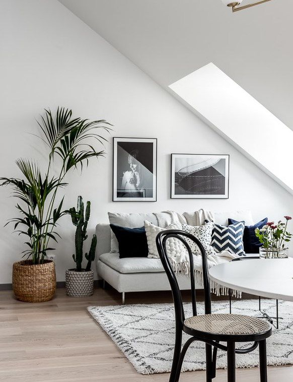 Best 25 Living Room Plants Ideas On Pinterest