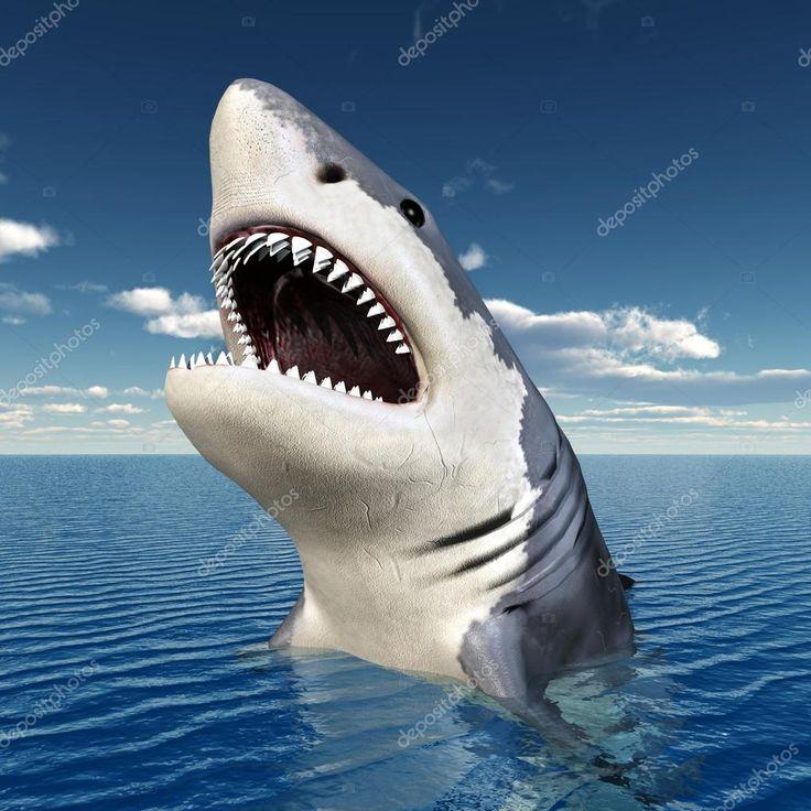 depositphotos_16256211-stock-photo-white-shark.jpg (1024×1024)