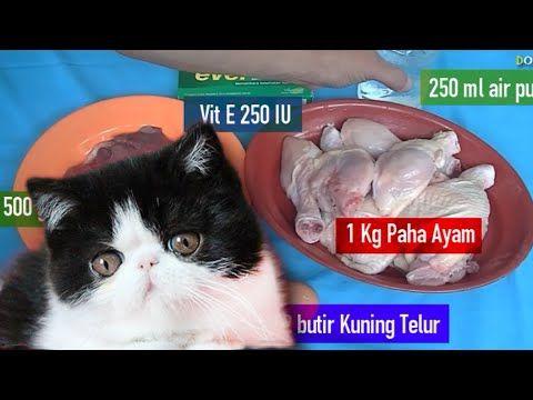 CARA MEMBUAT MAKANAN KUCING (RAW FOOD) BUATAN SENDIRI DIRUMAH - YouTube