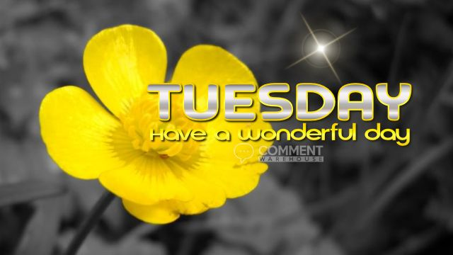 Tuesday Have a Wonderful Day   Tuesday Comments & Graphics, Happy Tuesday Comments, Happy Tuesday Graphics, Tuesday Pics, Tuesday Images, Tuesday Greetings