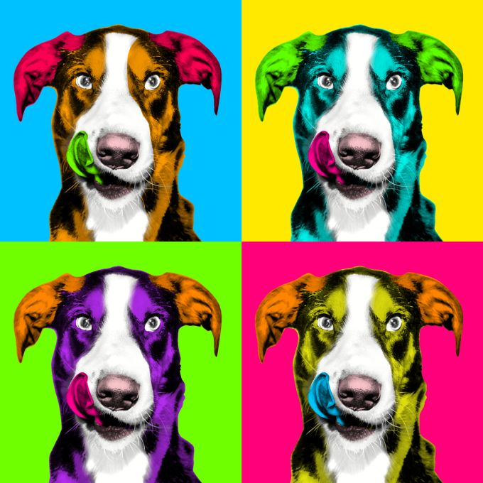 For only $5, I will pop Art Andy Warhol of your pet within 24 hr. | I will help you make the photo pop art like Andy Warhol style. My work is in digital format. draw and deliver pictures in digital | On Fiverr.com