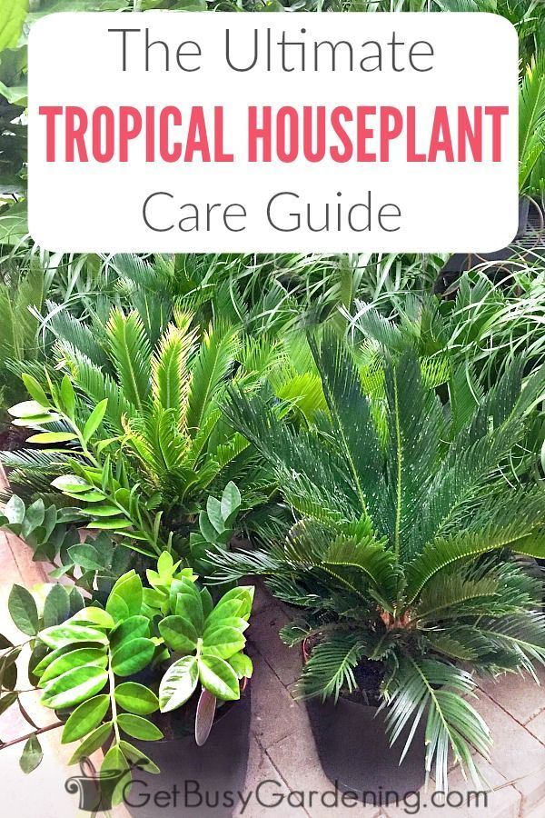 Tropical Houseplant Care Guide How To Grow Tropical Plants Indoors House Plant Care Plant Care Water Plants Indoor