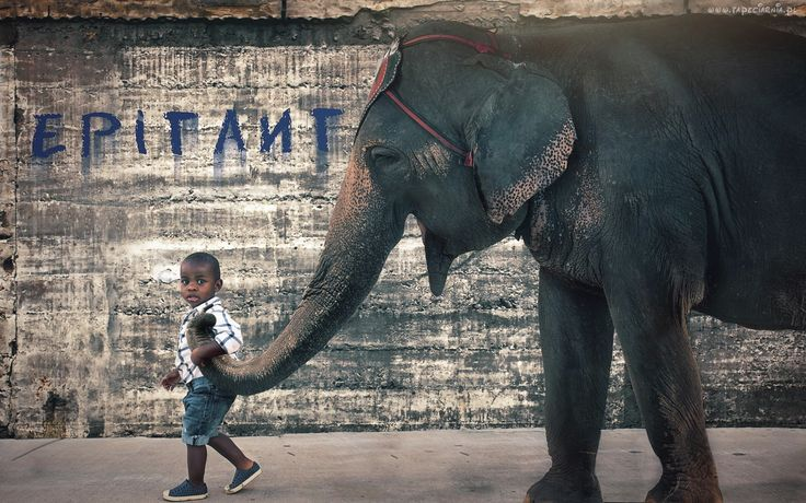 Chłopczyk, Słoń, Przyjaciele