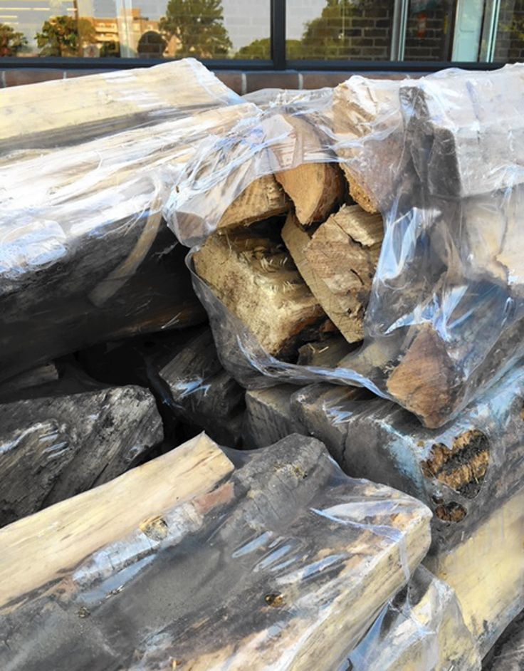 Bringing home firewood could be giving bugs a free ride
