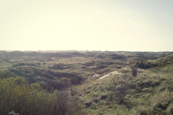 Herfstlandschap in het duin / Autumn in the dunes  Photo by Jorinde Reijnierse