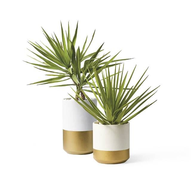 Our transitional column-style Rylan Planters are partially dipped in a gold all-weather powdercoat that adds a touch of elegance to any outdoor setting. Composed of sustainably sourced materials, including salt, sand, and trace minerals Dipped in gold powdercoat For outdoor use