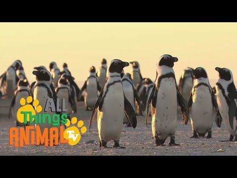 Time 4 Kindergarten: All About Penguins