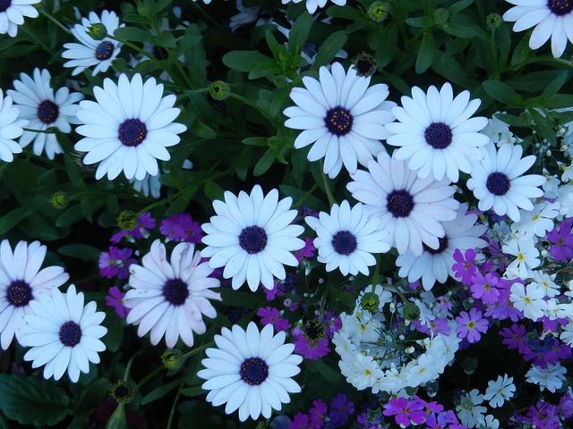 Flower festival in Toowoomba, Australia #travel #nature #flowers